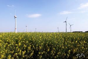 turbines flowers