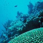 Coral-Reef
